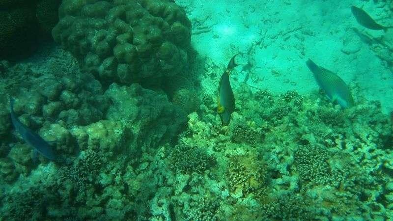 Surin Island 21